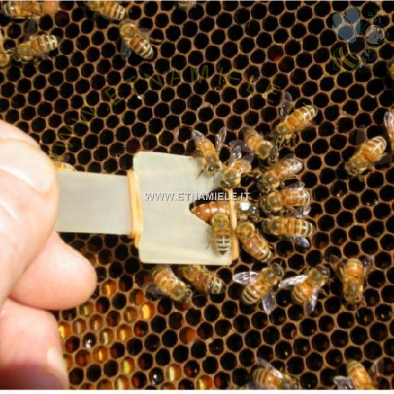 cattura api BR Tool clip per allevamento clip per api regina